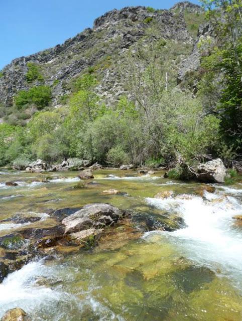 Río Torío, una muerte confirmada.