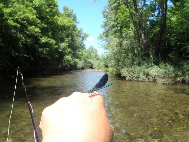Pescando…acrobacias aéreas.