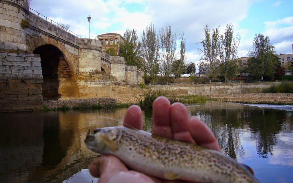 """Día Internacional """"Pesca a la Leonesa"""""""