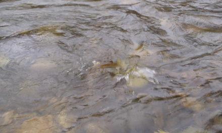 El primer día de pesca.